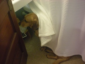 scared dog hiding from thunder storm